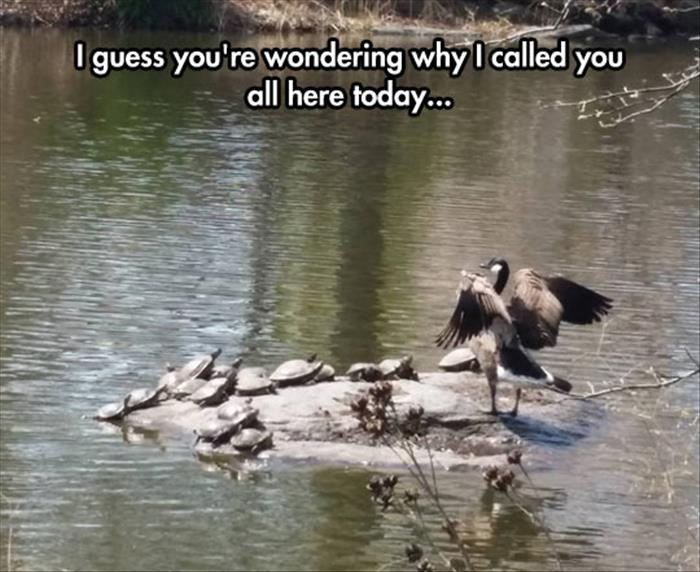 30 Funny animal captions - part 36, funny animal pictures with sayings, funny captioned pictures, captioned animal picture
