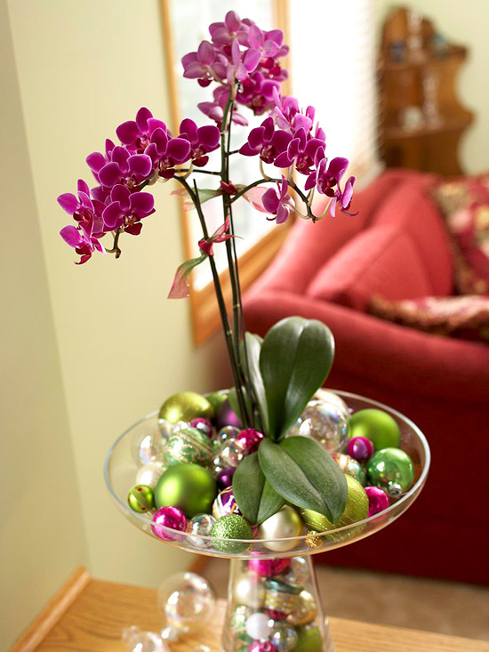 Easy Way to Grow Moth Orchids