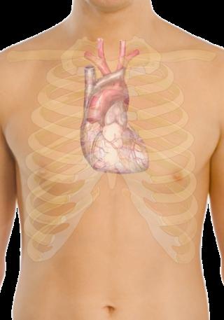 kalbin-anatomik-gorunumu