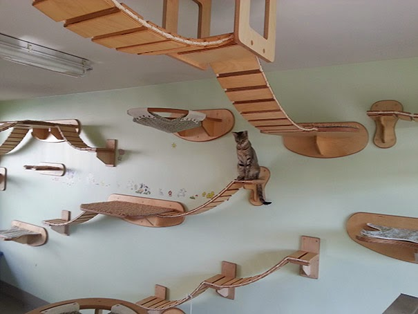 Overhead Cat Playgrounds With Walkways1