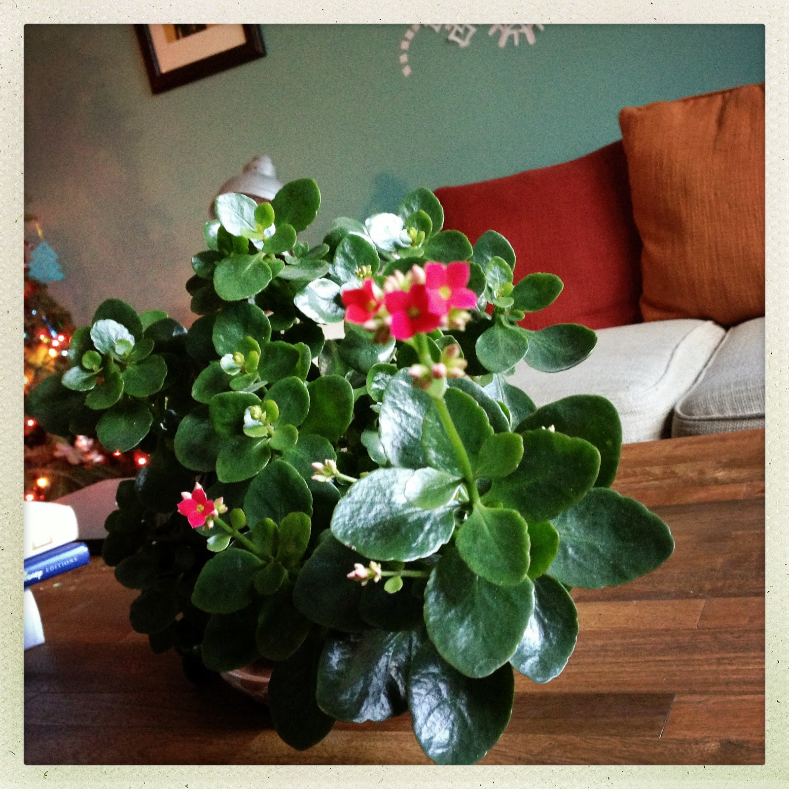 Disney Hipster Blog Christmas Miracle Flowering Mickey S Mini Garden