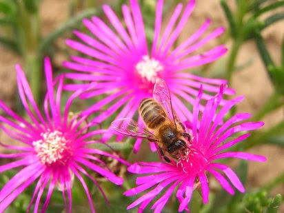 Noti t cnico econom a y turismo for Ahuyentar abejas jardin
