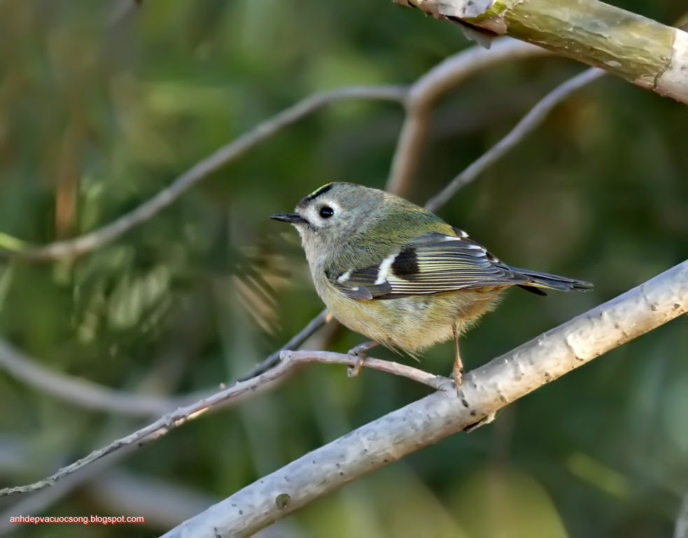 Ảnh thiên nhiên: Chú chim nhỏ 2
