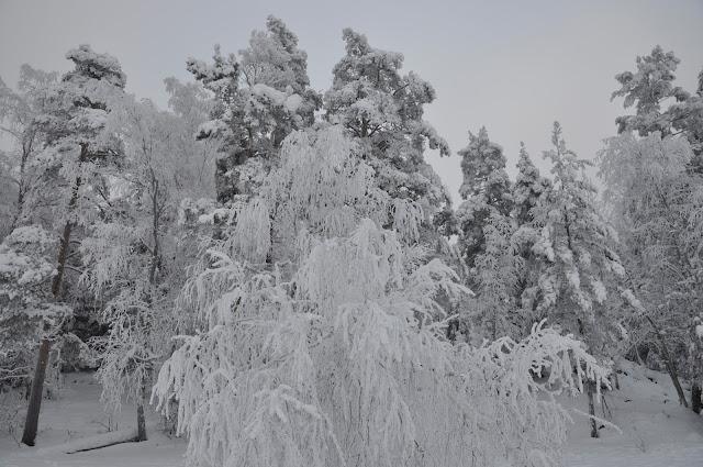 Bosques en Invierno