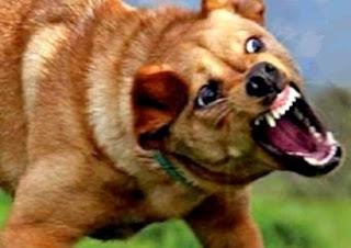 Cosa fare in caso di attacco da cane randagio