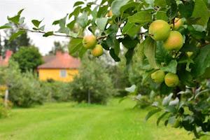 Ah, alkaa taas olla maailman parhaan omenapiiraan aika!