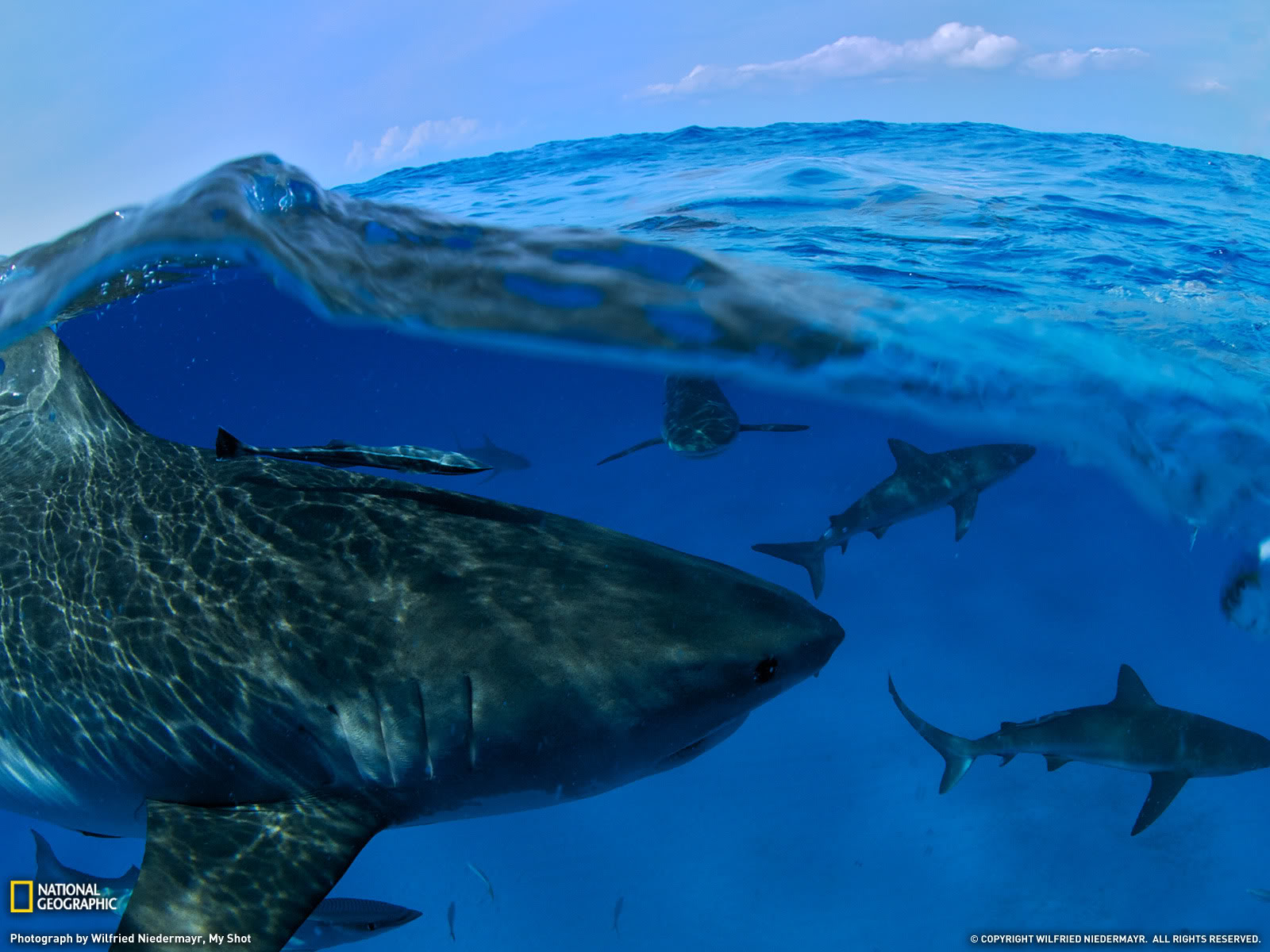 national geographic image of sharks