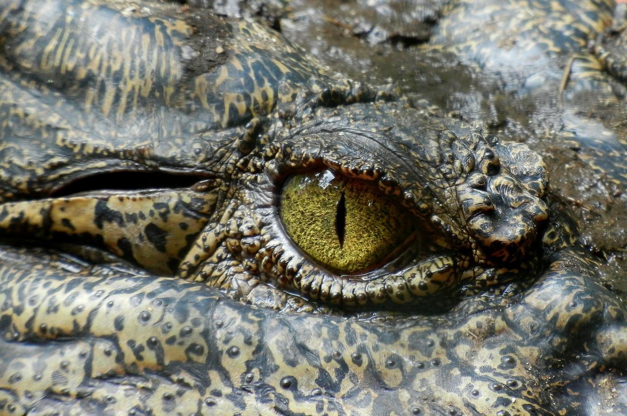 Blog de Animales Iván  Jimenez(Colaborador Javier Martín)