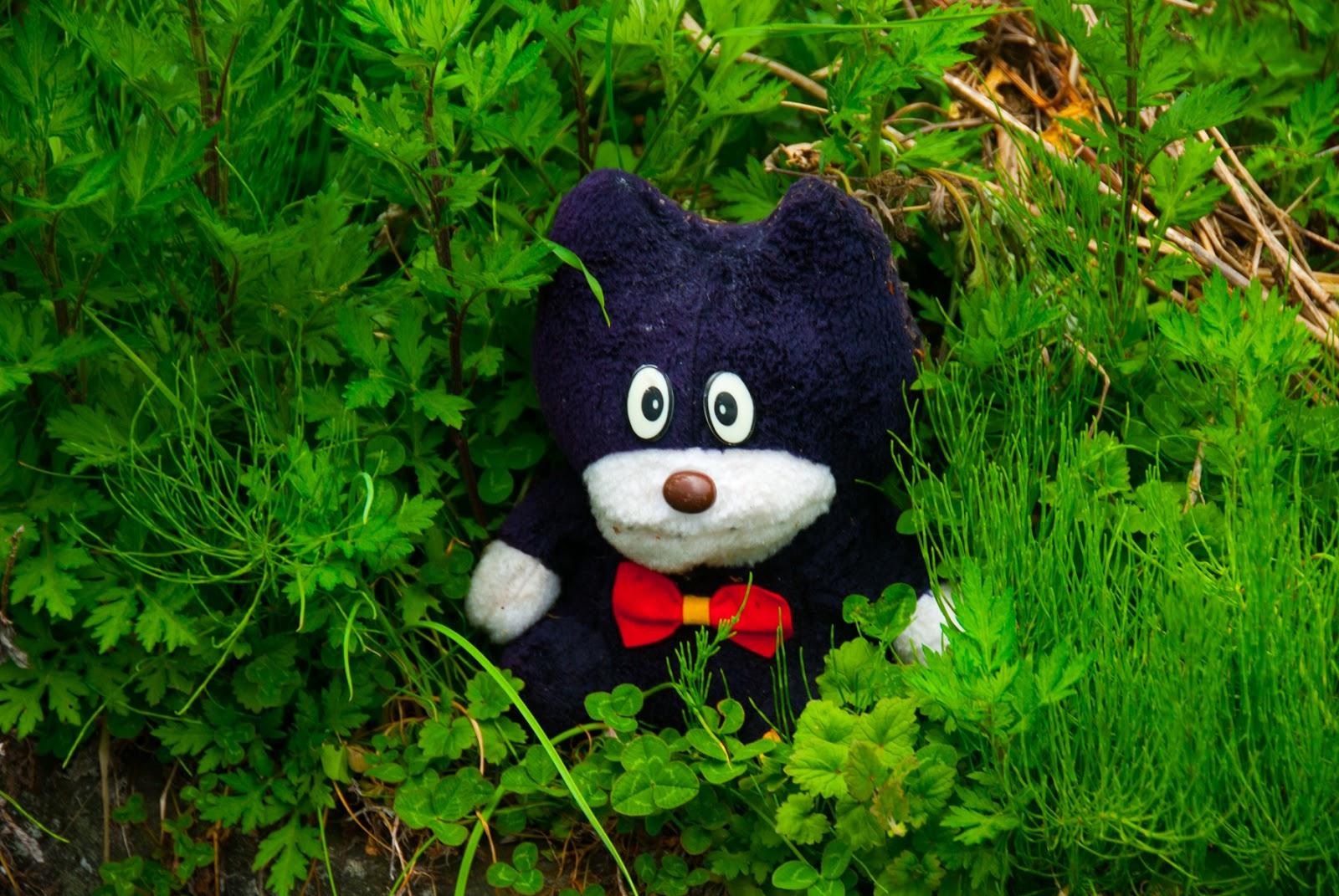 熊 キャラクター 謎