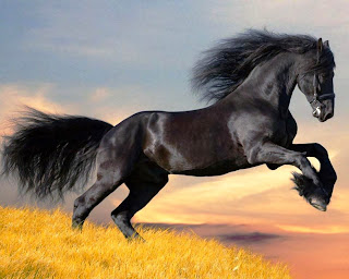 2014 - Year of the Horse - black horse running