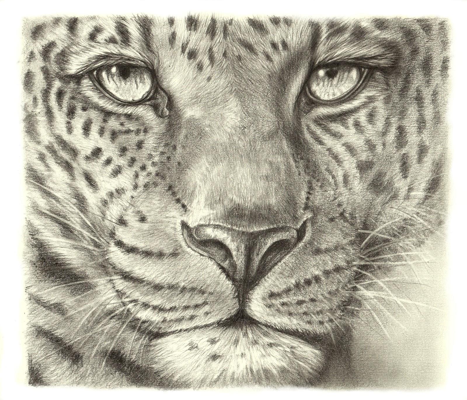 Leopard Pencil Drawings Easy Pencil Drawings O...