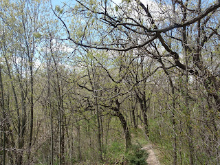 Old oak forest - Ice Age Trail - Blue Spring Lake Segment