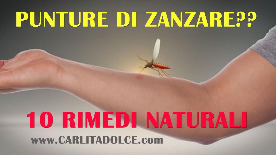 S o s punture di zanzare 10 rimedi naturali che - Contro le zanzare in casa ...