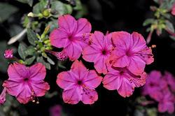 Las flores de Sor Cecilia