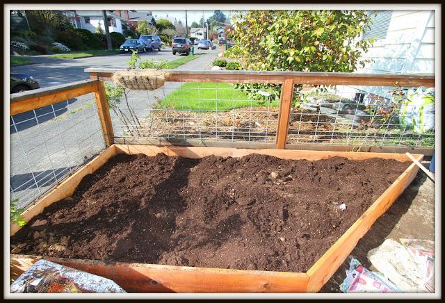 Desperate gardener lasagna gardening - Lasagna gardening in containers ...