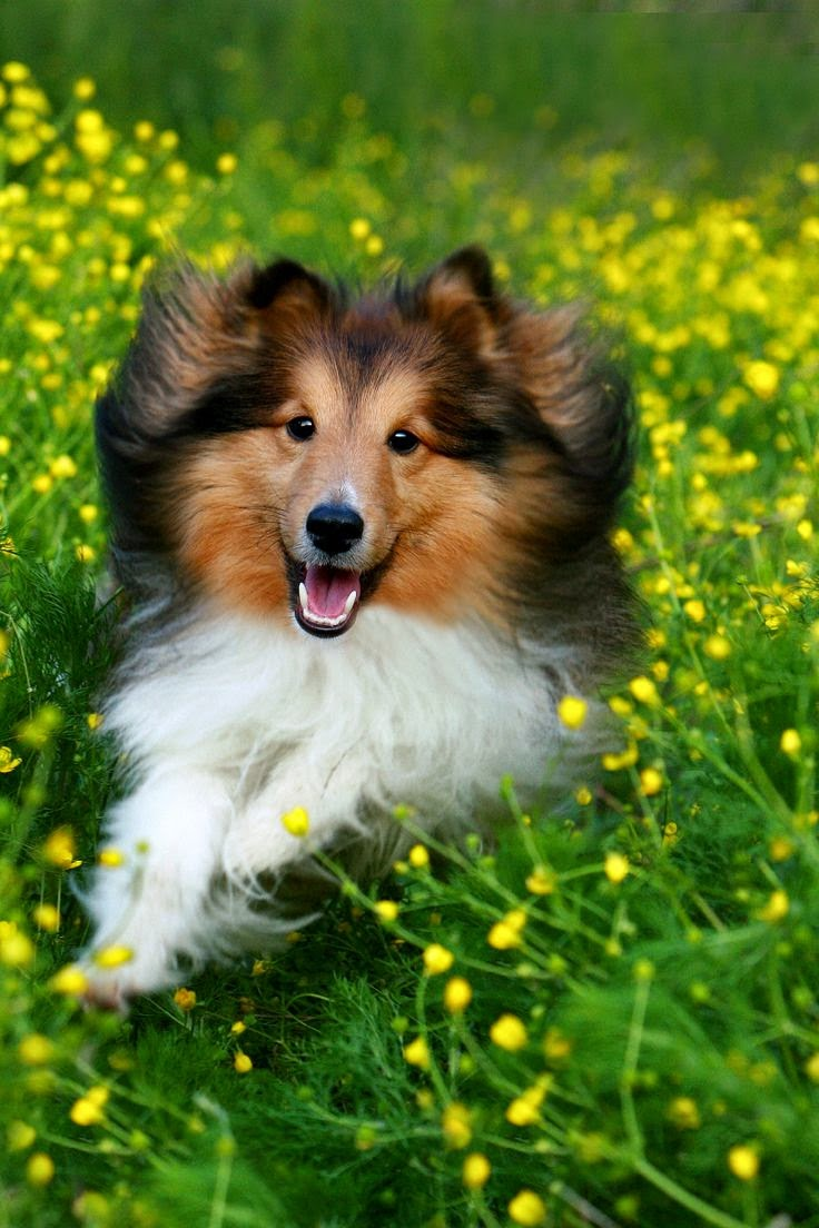 Top 5 Best Dog Breeds to Get Along With Cats