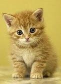 Viches un lindo gatiño en Proxecto Neo e Modelo Burela?