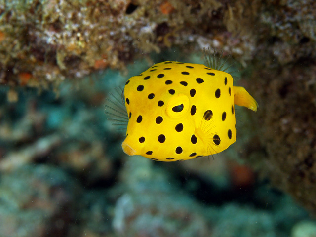 ... Quality Self Improvement Tips: Dont get carried away by that boxfish