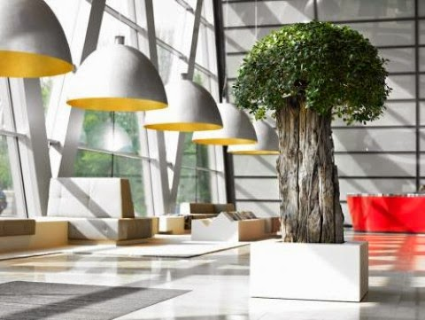 Having Plants In Your Office Will Increase Productivity