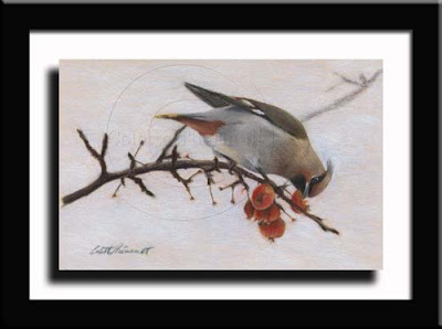 Bohemian Waxwing Drawing on Uart sandpaper