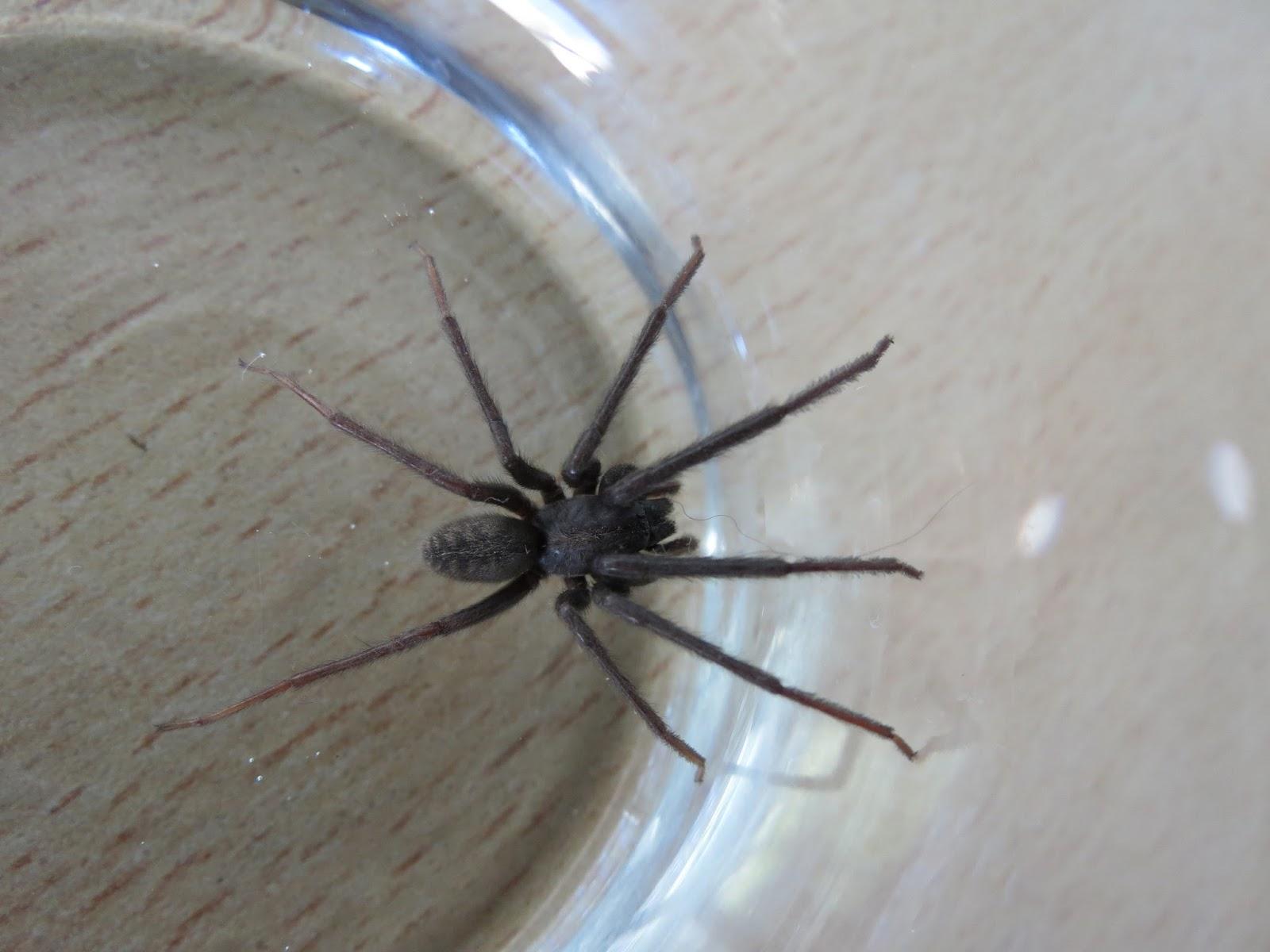 Como sacar las aranas de casa norberto de buenos aires - Como sacar las moscas de la casa ...