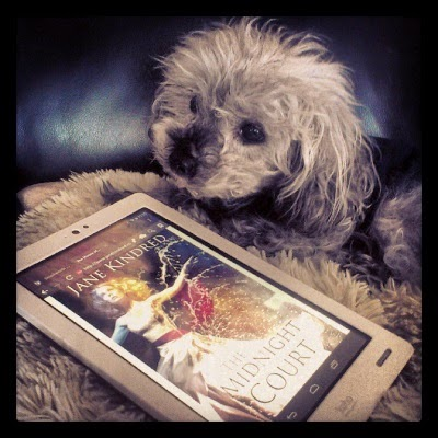 Murchie lays on his fuzzy pillow with a white Kobo in front of him. Its screen shows the cover of The Midnight Court, which depicts same woman twisted now towards the left side of the screen. The colour palette is the same, yet more muted.