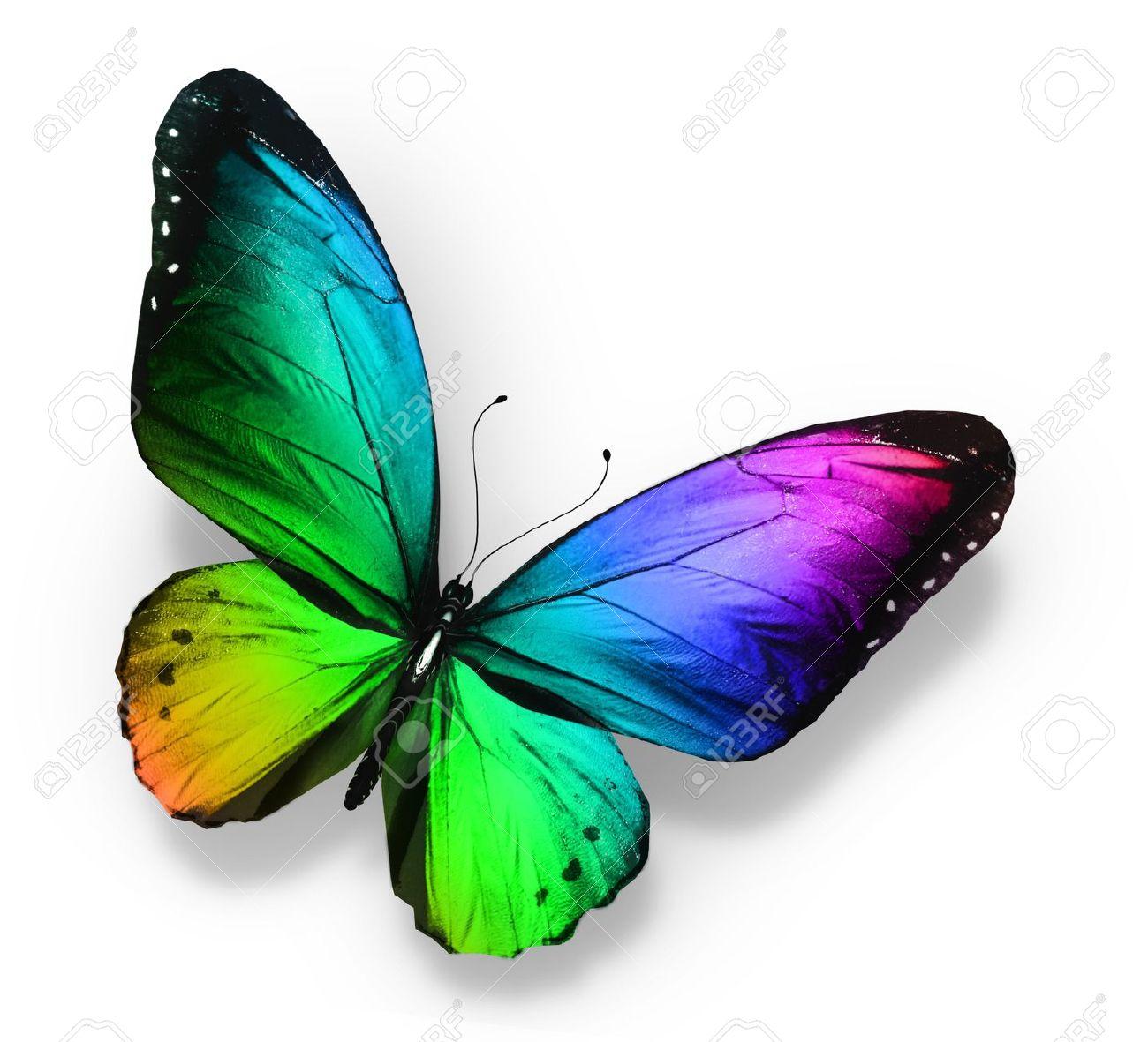 Mariposas De Colores. Perfect Mariposas Tropicales Vinilos ...
