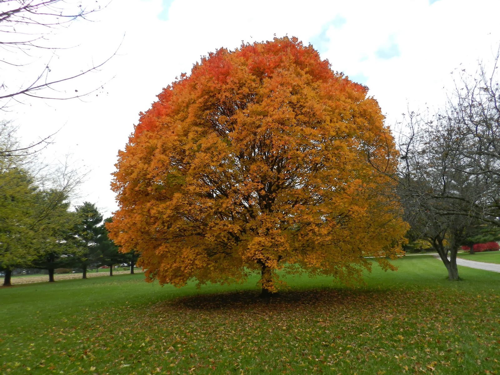 The colors of autumn viral infections articles