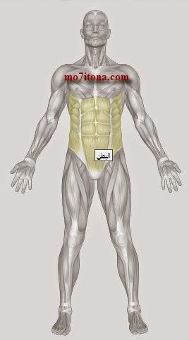 موقع إلكتروني يعلمك كيف تمرن عضلاتك بطريقة احترافية لهواة رياضة بناء الأجسام