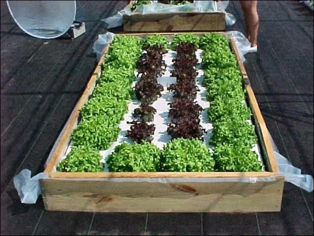 Commercial Connection Hydroponic Workshops For Small