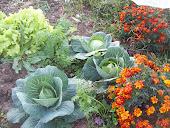 Fall Garden 11/11