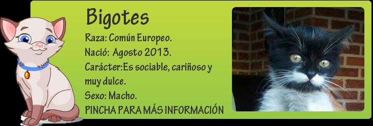 http://mirada-animal-toledo.blogspot.com.es/2013/10/bigotes-encontrado-en-el-motor-de-un.html
