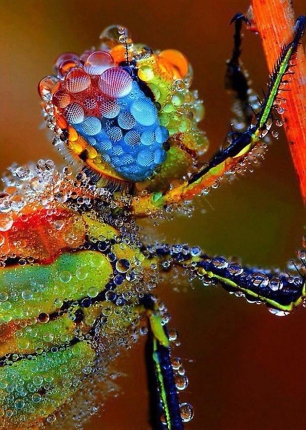 Kolorowy pająk