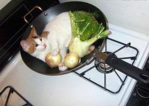 ¡ALTO... o cocino al gato!