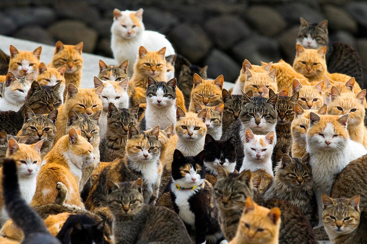 Aoshima Cat Island-Japan