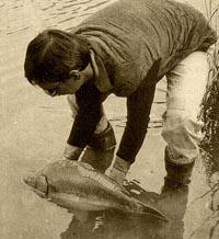 Cách chiến đấu với các loài cá chép (P3)