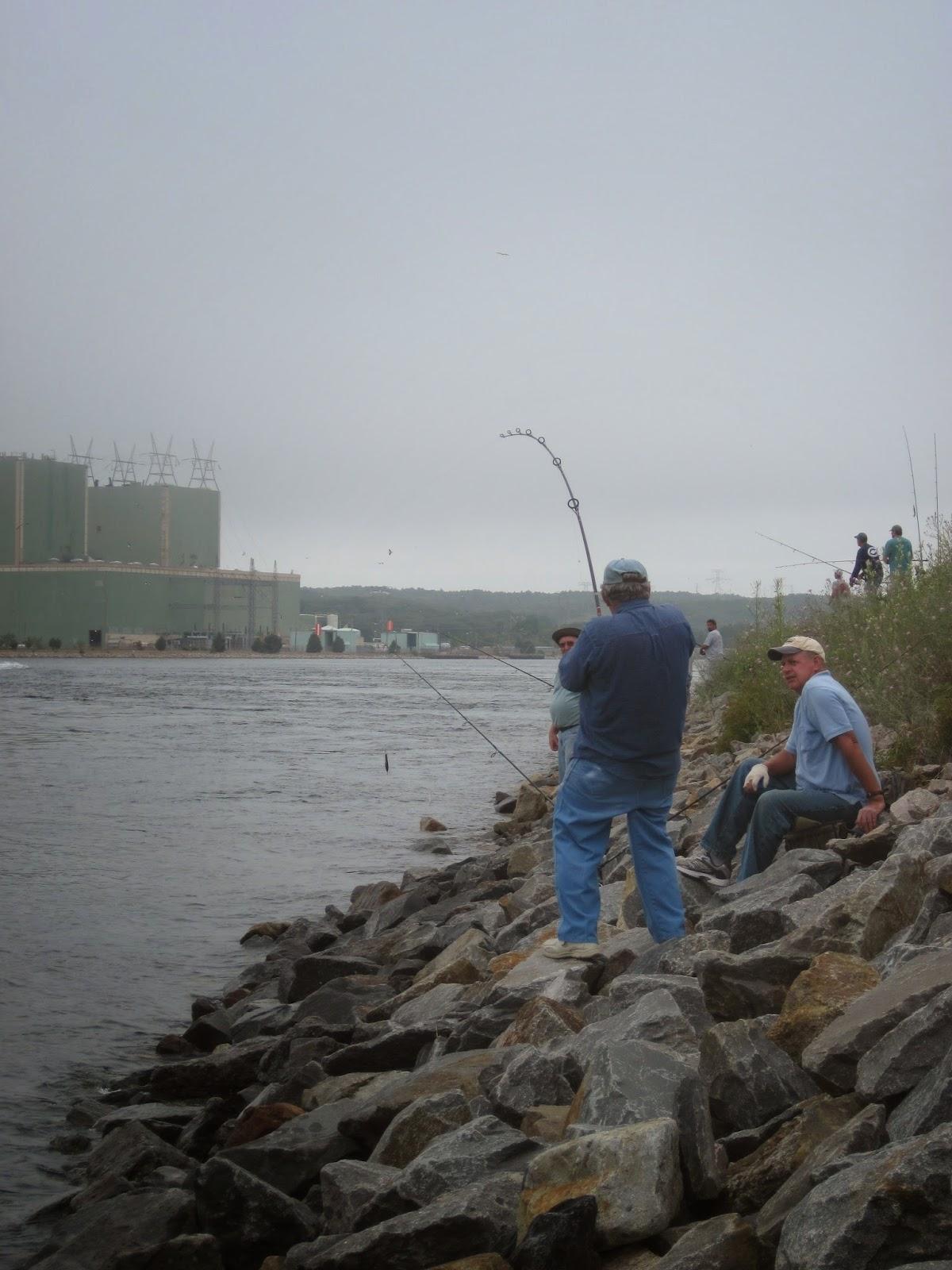 Rhode island striped bass cape cod canal alert for Cod fishing ri