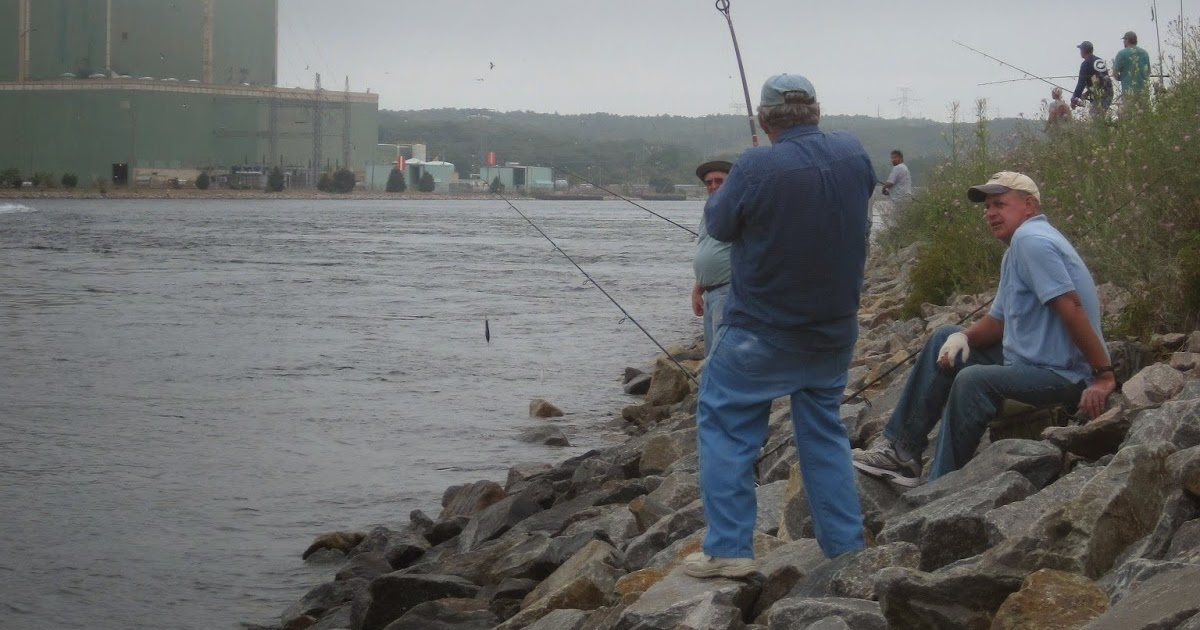 Rhode island striped bass cape cod canal alert for Canal bait and tackle fishing report
