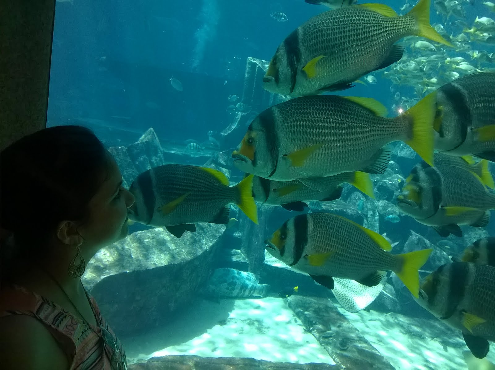 Fish aquarium in umm al quwain - Totally Worth The Dirhams This Aquarium Is A Must Visit The Display Is Huge The Theme Being The Mythical Lost City Of Atlantis
