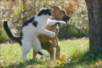 Fight Like Cats And Dogs Synonym