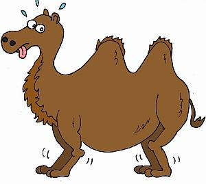 Chistes, Camello Trabajador.