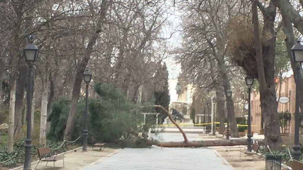 24 marzo Un árbol caído mata a un niño en el Retiro