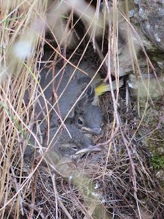 http://langholmmoorland.blogspot.co.uk/