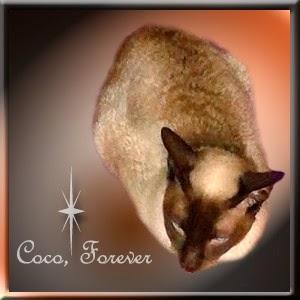 R.I.P. Coco.