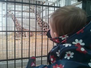 inside giraffe