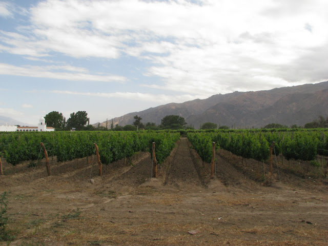 Valles Calchaquies cafayate vineyards argentina