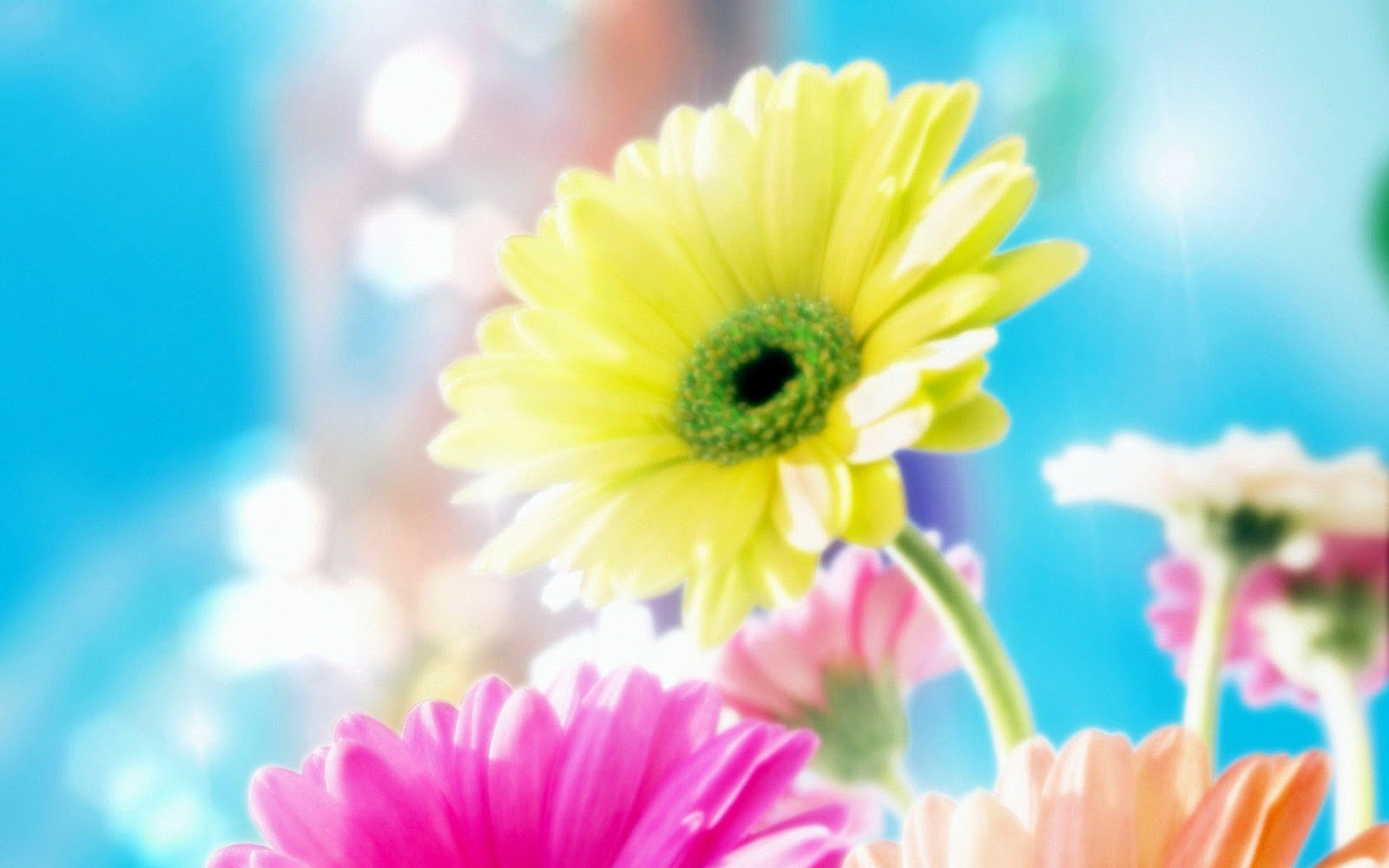 most beautiful flower wallpapers - sweet flowers delights