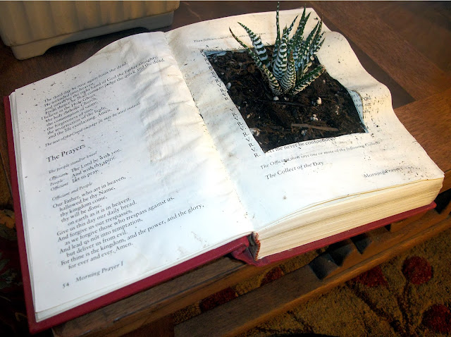 Haworthia Attenuata in Bible Planter