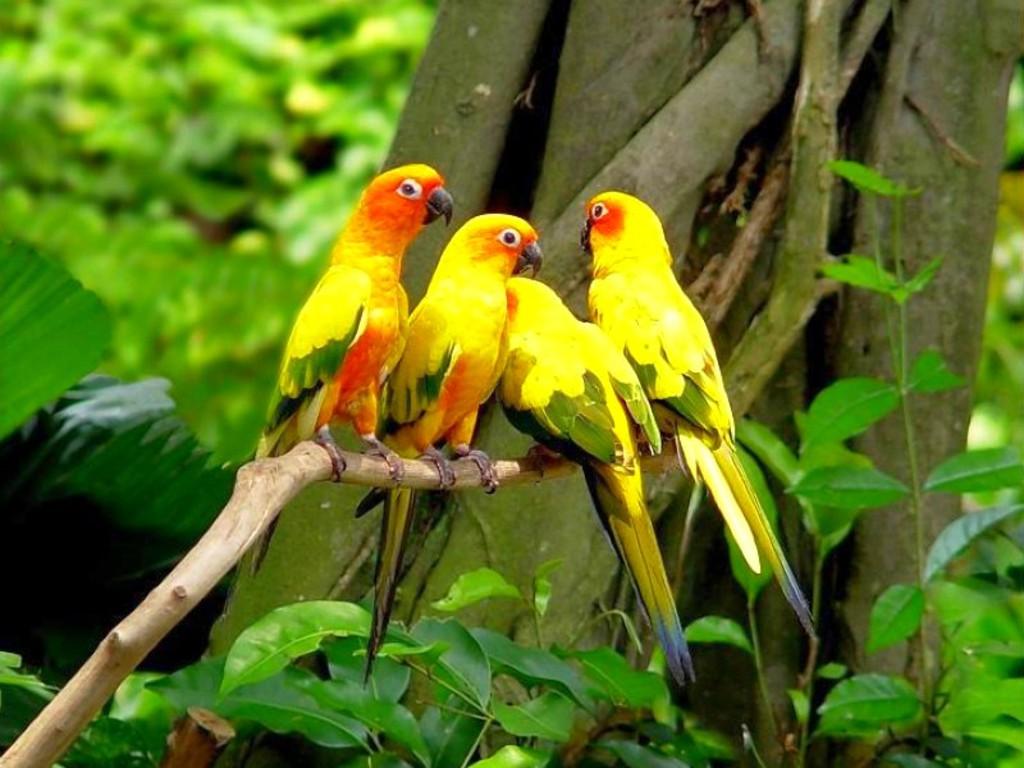 tropical colors parrot wallpapers - Tropical colors parrot hd wallpaper for desktop background
