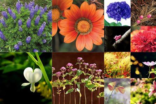 Fotografías de flores muy lindas para compartir
